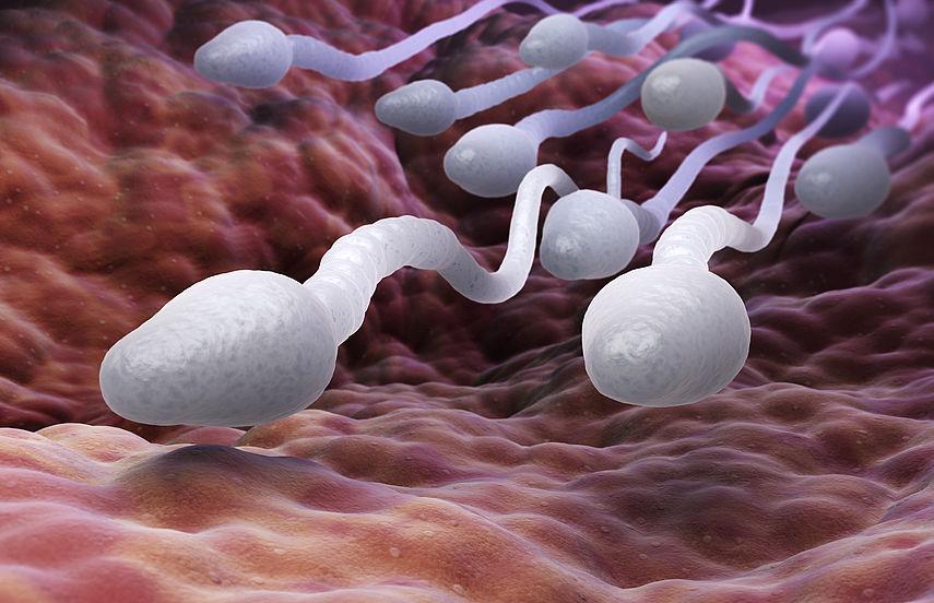 Spermien Gesund