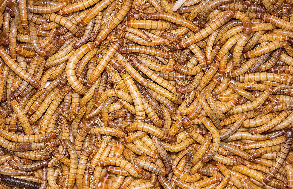 Am arsch jucken Welche Würmer